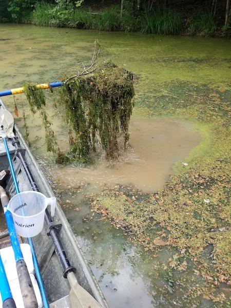 Pond & Lake Management