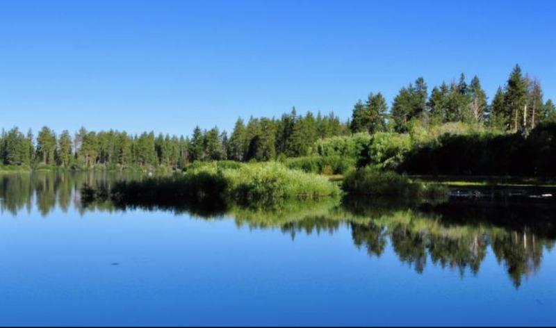 6 Reasons to use Lake or Pond Dye