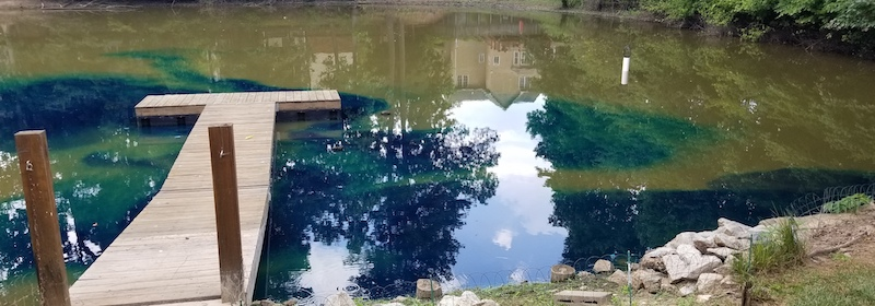 Pond Dyes help control submerged weeds and Algae