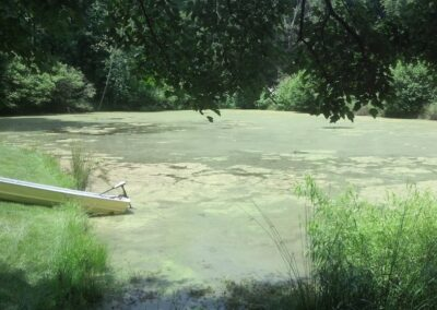 Algae suffocates other pond growth and fish in Ponds and Lakes