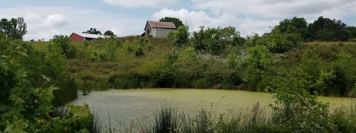 Pond or Lake Algae Bloom